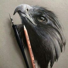 Pencil Art Wildlife Art by Jonathan Martinez - Strathmore Artist Papers Amazing Drawings, Beautiful Drawings, Amazing Art, Awesome, Bird Drawings, Animal Drawings, Horse Drawings, Eagle Drawing, Color Pencil Art