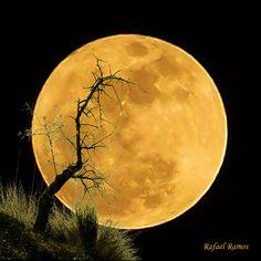 Harvest moon, beautiful