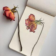 Moleskine — Artwork by Plant Drawing, Painting & Drawing, Art Sketches, Art Drawings, Pencil Drawings, Pencil Art, Vintage Clip Art, Arte Sketchbook, Fashion Sketchbook