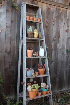 succulent-ladder-seaside-succulents-a-garden-tour