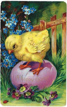 Antique Easter Postcard Baby Chick Egg Flowers Embossed Vintage 1910 Germany #Easter