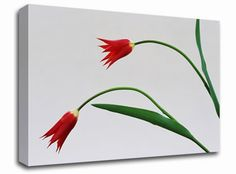 Twin Fire Tulips floral canvas from only £19.99 at Infusion Art http://www.infusionart.co.uk/products/Twin-Fire-Tulips-251428.aspx