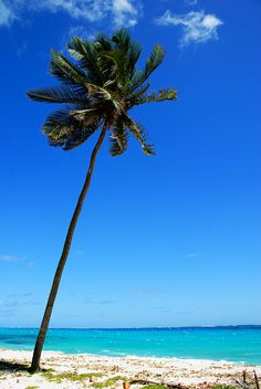 Imagine Sky High Above by Tobago_Pictures, via Flickr