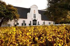 Groot Constantia is the oldest wine estate in South Africa and provincial heritage site in the suburb of Constantia. With a variety of other attractions, including restaurants & museums a visit to Groot Constantia becomes an Stuff To Do, Things To Do, Old Things, Throughout The World, Heritage Site, Cape Town, South Africa, Mansions, House Styles