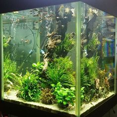 Love this tank. It will be always freshwater                                                                                                                                                                                 More
