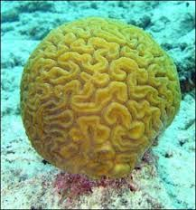 Resultado de imagen para beautiful coral reefs