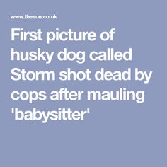 First picture of husky dog called Storm shot dead by cops after mauling 'babysitter' Dog Attack, Husky Dog, Cops, Birmingham, One Pic, Pitbulls, Pictures, Photos, Pit Bulls