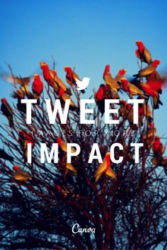 Tweet Images for More Impact on Twitter http://blog.canva.com/tweet-images-more-impact-twitter/