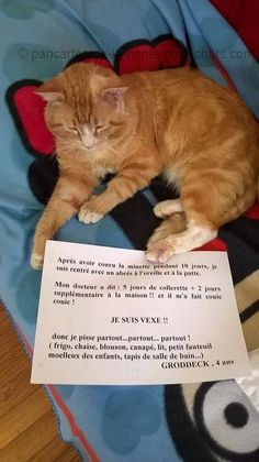 « After chasing after girls during 10 days, I come back to home with My doctor says: 5 days with an ear and a paw abscesses + 2 extra days at home!! And he did couic couic! I'm offend!! So I pee every… every… every… where! (fridge, chair, jacket, sofa, confortable armchair of children, bathroom carpet…) GRODDECK, 4 years old » #lolcats #shameyourpet #shameyourcat #cat #cats #chats