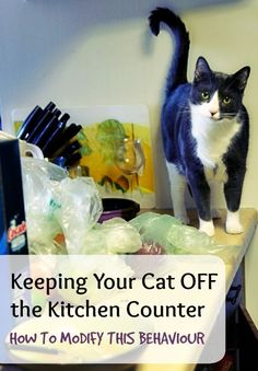 Jumping on kitchen counters is a common behavioural problem in cats. Why do they do it? | Keeping Your Cat OFF the Kitchen Counter