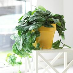 Houseplants Can Actually Make You Healthier Having plants in your space can help your mental and physical health in multiple ways.Having plants in your space can help your mental and physical health in multiple ways. Indoor Plants Clean Air, Indoor Plant Pots, Best Indoor Plants, Cactus House Plants, Garden Plants, Cactus Decor, Cactus Art, Ivy Plants, Water Plants