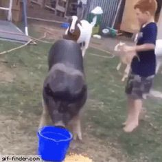 This kid doesn't need no console to have fun - Find and Share funny animated gifs Funny Dog Memes, You Funny, Funny Kids, Funny Cute, Funny Animal Videos, Funny Animals, Tierischer Humor, Just For Laughs, Have Fun