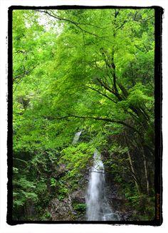 払沢の滝 桧原村 kurosuke ishigaki