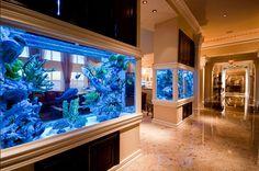 Million Dollar Rooms Aquarium Wall Aquarium, Home Aquarium, Aquarium Design, Aquarium Fish Tank, Cichlid Aquarium, Aquarium Ideas, Cool Fish Tanks, Saltwater Fish Tanks, Saltwater Aquarium