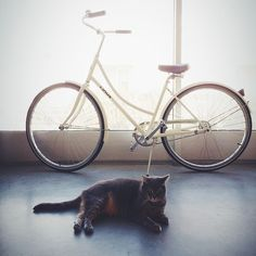 Mango, the only bike security system you'll ever need. Belly rubs accepted.