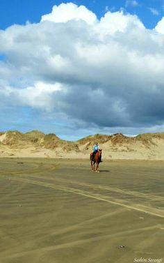 #90mile_beach #New_Zealand #Photography #Nature #Sea #Horse #Sashini_Sarangi