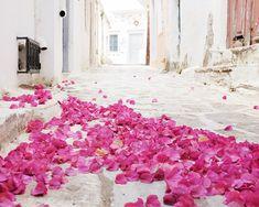 Bougainvillea / flower petals in the street / by LupenGrainne