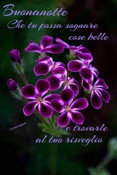 Good Night Messages, Dumb And Dumber, Words, Dalai Lama, Ely, Buen Dia, Mother Teresa, Positive Thoughts, Italian Greetings