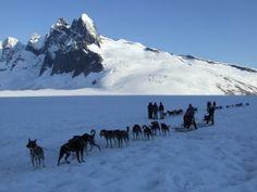 Alaska | Summertime Dogsledding in Alaska (c) Linda Garrison