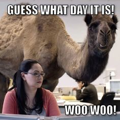 Hump Daaaayyyyy!!! Ps watch you don't wear tight fitting clothes that reveal a camel toe too