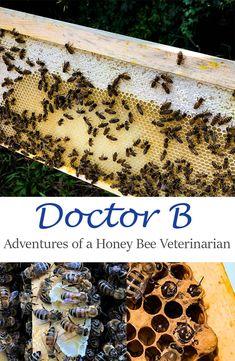 Adventures of a Honey Bee Veterinarian Honey Bee Hives, Veterinary Medicine, 5 Year Olds, Make It Through, Pet Health, Native Plants, Public School, Botanical Gardens, Kids Playing