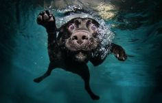 Some awesome diver...  :)