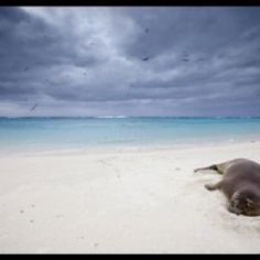 Midway island Midway Atoll, Wanderlust Travel, Color Photography, Places To See, To Go, Islands, Wanderlust, Island