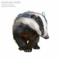 """Humbug"" by Rachel Wild Artist - Happy Tiere Forest Creatures, Woodland Creatures, Woodland Animals, Badger Illustration, Illustration Art, Illustrations, British Wildlife, Wildlife Art, Animal Drawings"