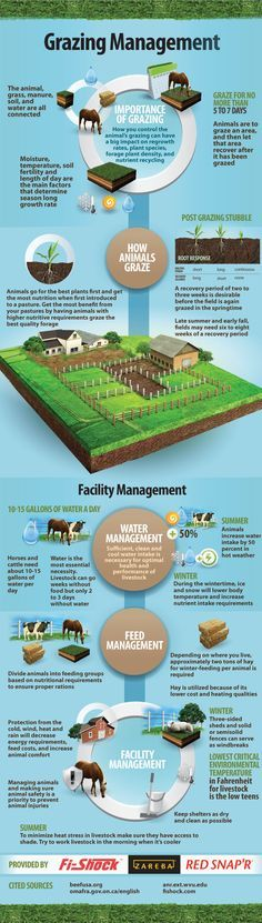 This implies about 3-4 pastures are necessary for pasture rotation. This would be possible, but expensive. Worth it? Grazing Management Infographic