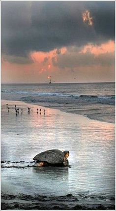 South Carolina (Beautiful! I can see one of those Klingon fishing ships in the…