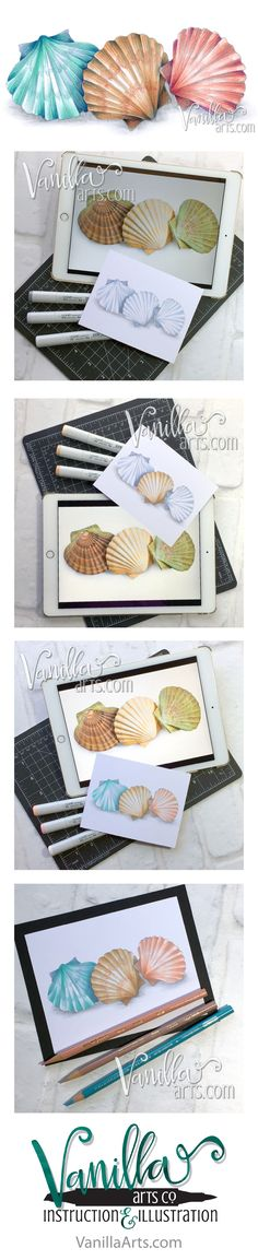"Beginner Online Course- Marker Painting Foundations, ""Seashells"". Week 8 lesson on Underpainting with Copic Markers. 