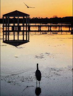 College Park Orlando, Reflection Photos, Florida Beaches, Sunrise, Birds, Bird, Sunrises
