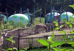 Veluwecamping 't Schinkel ligt bij Hoenderloo op de Veluwe. Deze bijzondere en kindvriendelijke camping is werkelijk vorstelijk aangelegd. Je kunt zelfs op stand slapen.