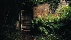 Introduction | The Lost Gardens of Heligan