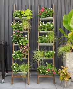 Urban Garden Design - An Iowa couple found a mod downtown home they loved, but its cool rooftop patio lacked life. Vertical Herb Gardens, Outdoor Gardens, Vertical Planter, Hanging Gardens, Hanging Planters, Rooftop Patio, Balcony Garden, Garden Grass, Garden Shade