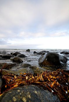 seaweed | Flickr : partage de photos !