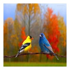 Yellow Finch and Blue Bird in Autumn. to use for painting! Love Birds, Beautiful Birds, Beautiful World, Animals Beautiful, Cute Animals, Beautiful Things, Yellow Finch, Chant, Colorful Birds