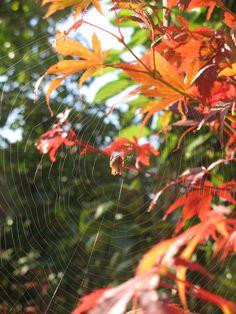 Spiderweb on leaves