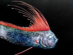 Online Aqurium Shopping: Geheimnisse, Ratschläge und Tipps, die Sie brauchen The Giant Oarfish is the world's largest known bony fish, up to 11 m ft) long. They usually live at a depth of around 650 feet below but linger near the surface if sick or d Deep Sea Creatures, Weird Creatures, Underwater Creatures, Underwater Life, Oarfish, Fauna Marina, Life Under The Sea, Sea Monsters, River Monsters
