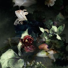 Gorgeous and Expressive Portraits of Flowers by Isabelle Menin - My Modern Met