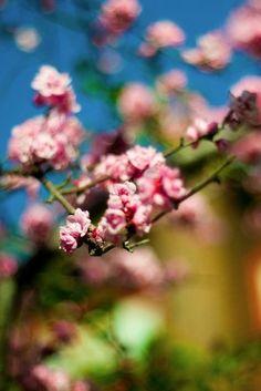 Season | Spring by lea