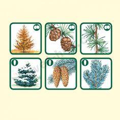 Pexetrio Znáš naše stromy? Puzzle, Education, Nature, Seasons, Fall, Puzzles, Riddles, Educational Illustrations, Learning