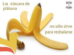 El interior de la cáscara de plátano tiene efectos curativos y es útil para blanquear los dientes, quitar verrugas, psoriasis y acné. ¡No la tires! www.bistropaloma.com.mx                                         TWITTER                                                          https://www.twitter.com/BistroPaloma                      INSTAGRAM                                                       https://www.instagram.com/bistropaloma/               PINTEREST
