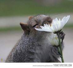 One Squirrel, One Flower…