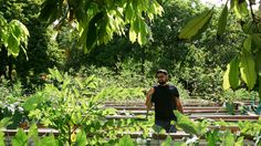 The Miami chef grows produce in his backyard in Homestead, Fla. — the only part of the contiguous United States with a tropical monsoon climate.