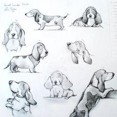 Basset Hound doodle study