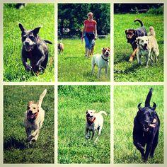 Run & play, and run & play and run & play! #evasplaypupspa #badassbk #endlessmountains #mountpleasant #dogdaysofsummer