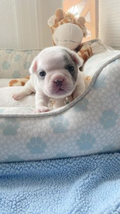 Cute Baby Puppies, Super Cute Puppies, Baby Animals Super Cute, Cute Wild Animals, Baby Animals Pictures, Cute Animal Videos, Cute Little Animals, Cute Animal Pictures, Cute Funny Dogs