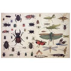 would love to frame some john derian paper maybe? love bugs! // John Derian Company Inc — Insects