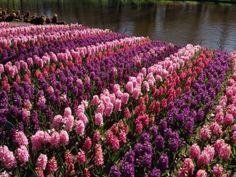 Spring flowers #spring #flowers